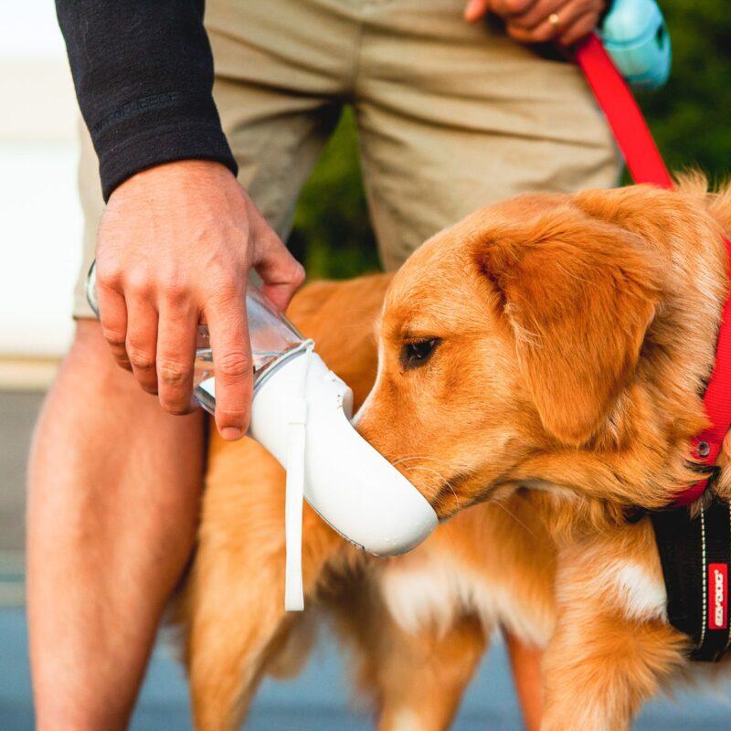 ποτίστρα σκύλου στη βόλτα