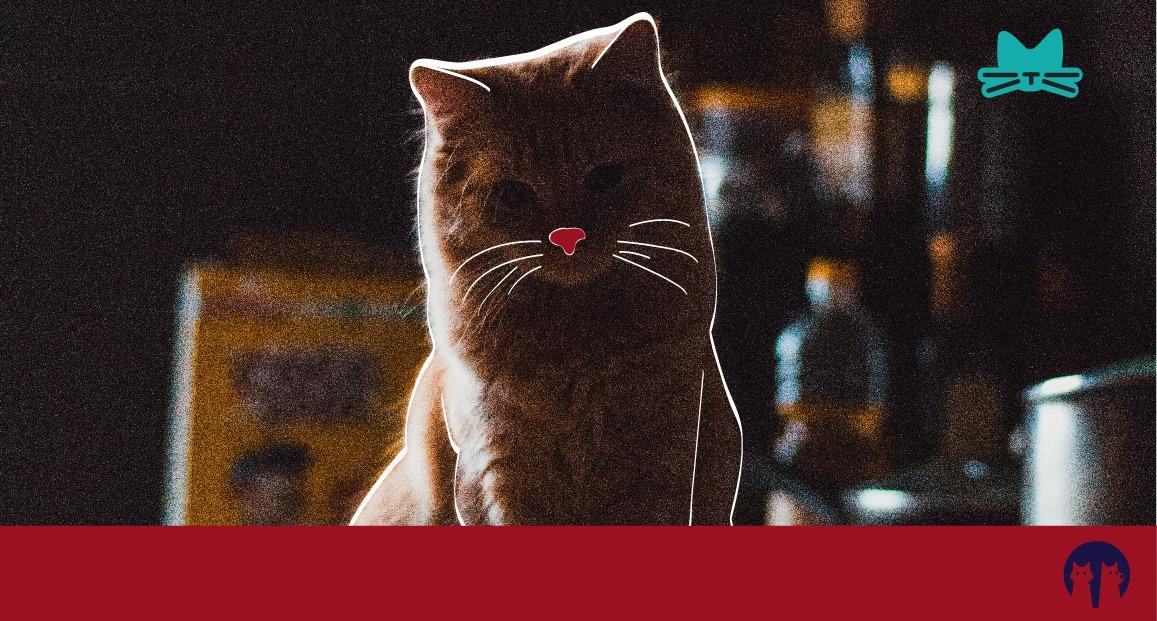 Πως μπορείς να σταματήσεις τη γάτα σου από το να ανεβαίνει στον πάγκο της κουζίνας;